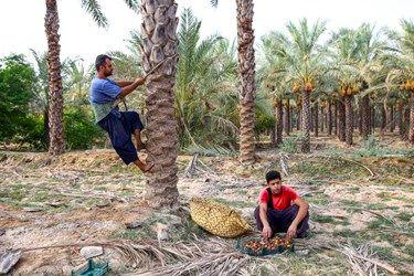 کارگر جوان در حال بالا رفتن از نخل