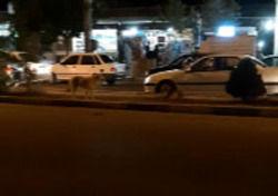 خیابانهای پرند جولانگاه سگهای ولگرد شد + فیلم