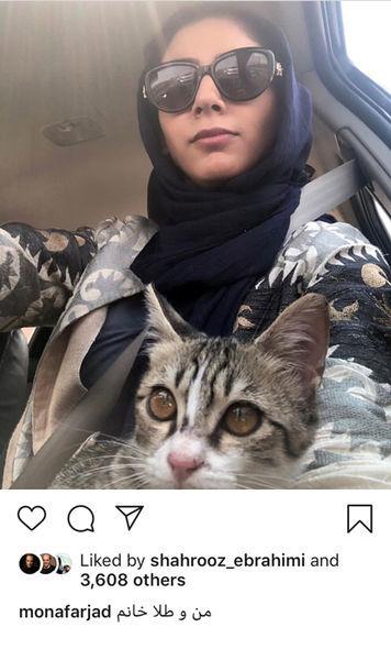 رانندگی مونا فرجاد با گربه اش + عکس