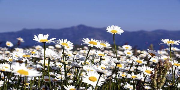 عوارض ناشی از کرونا را با این گیاهان دارویی درمان کنید