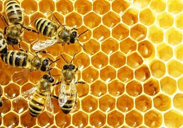مشکلات عسل، برای زنبورداران