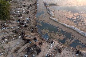 موتورهای بسیار زیاد آب در کنار آب بندان لپو زاغمرز جهت تخلیه آب مورد نیاز کشاورزی