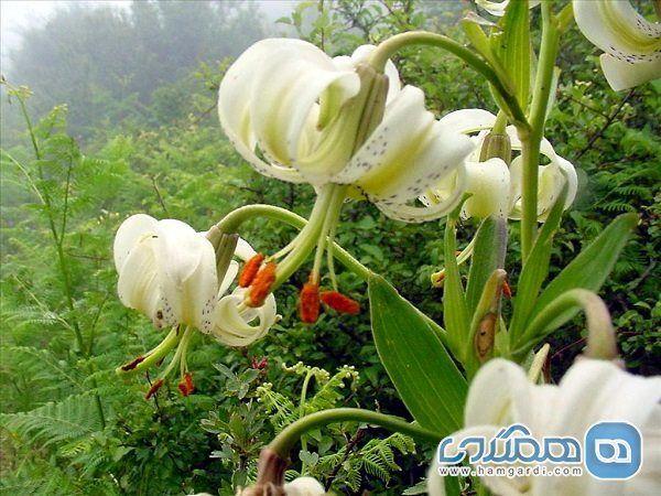 بخش هایی از طبیعت گیلان که در فهرست ثبت آثار ملی کشور قرار دارد !