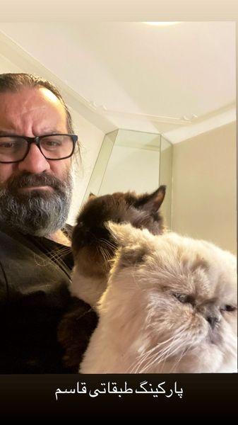 گربه های اخمو خانه آقای نویسنده + عکس