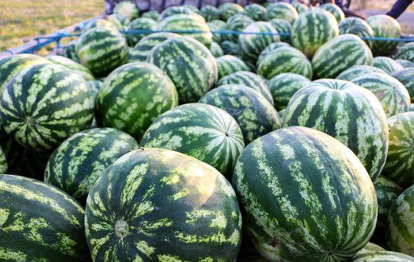 میزان هندوانه در بازار افزایش یافت
