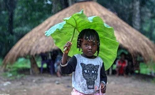 چتر متفاوت کودکان گینه ای + عکس