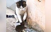 حمله ناباورانه موش به گربه + فیلم
