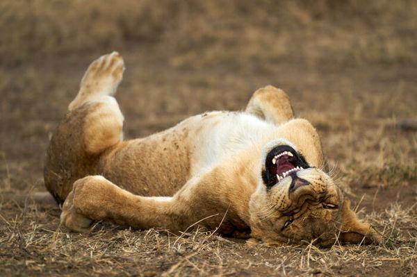 عکاسی کمدی از حیات وحش+تصاویر