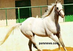 ماجرای واردات اسب در فرست کلاس و اصلاح نژاد اسب ایرانی