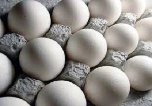واردات تخم مرغ راهکار مناسبی برای تنظیم بازار نیست