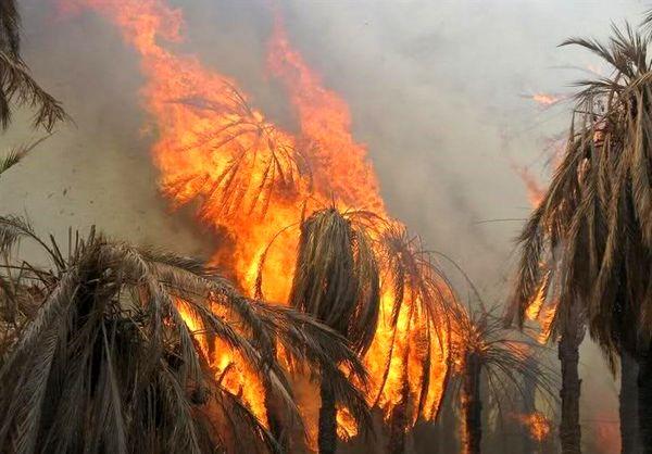 آسیب 40 تا 80 درصدی نخلهای آبپخش بوشهر بر اثر آتش سوزی