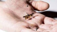 نخستین حشره رباتیک بی سیم از زمین برخاست