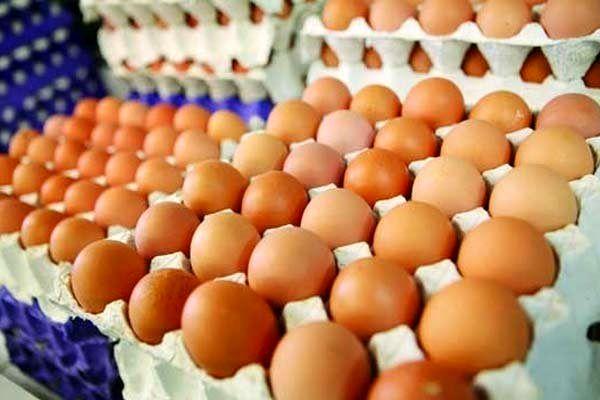 کاهش قیمت تخم مرغ در یک هفته اخیر
