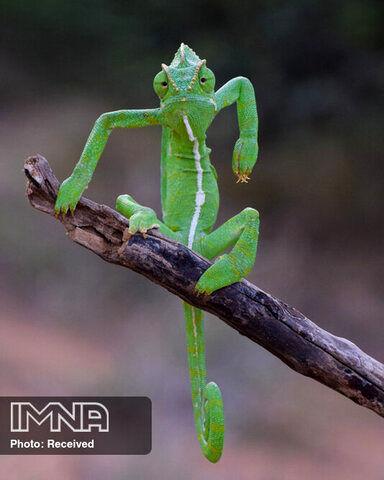 کمدی حیات وحش عکاس Gurumoorthy Gurumoorthy رشتهکوه سَهیادری هند