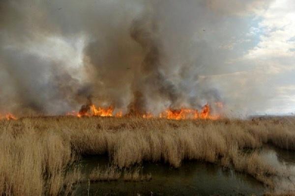 آتش سوزی هورالعظیم فاجعه بزرگ زیست محیطی