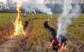 آتش بس در مزارع مازندران!