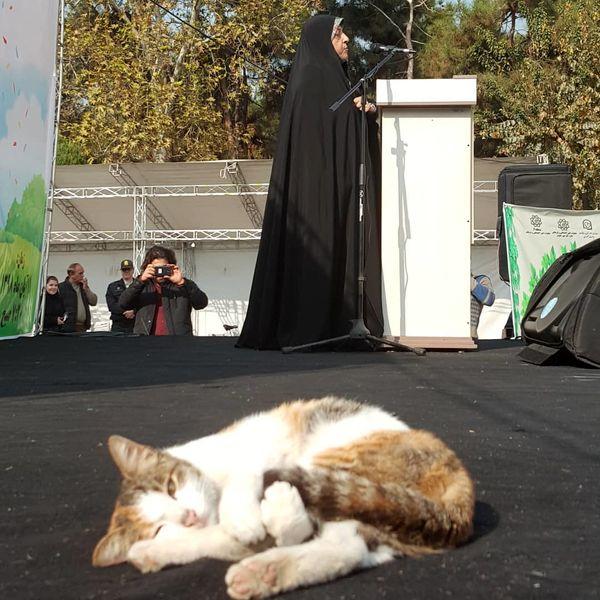 معصومه ابتکار و گربه شیطون+عکس