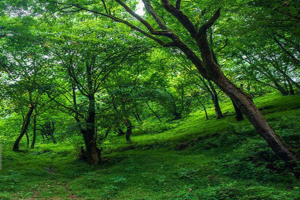 اراضی جنگلی ساری را نمیتوانیم موقوفه تلقی کنیم