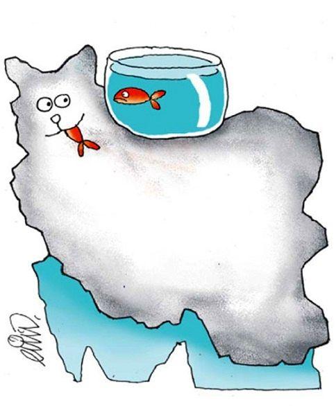 گربه ایرانی و ماهی خزر!