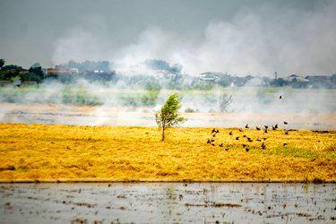 بد وجود کم آبی شدید در کشور در مناطق مختلف مازندران دست به کشت دوم برنج میزنند که این میزان قابل توجهی از منابع آب استا ن را هدر میدهد